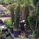 15-pb-hortikultura-galerija-13042015