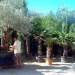 19-pb-hortikultura-galerija-13042015