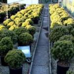 24-pb-hortikultura-galerija-13042015