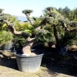 29-pb-hortikultura-galerija-13042015