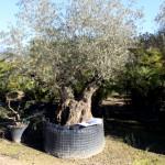 30-pb-hortikultura-galerija-13042015